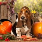 Dare un Nome al Tuo Cane o Cucciolo