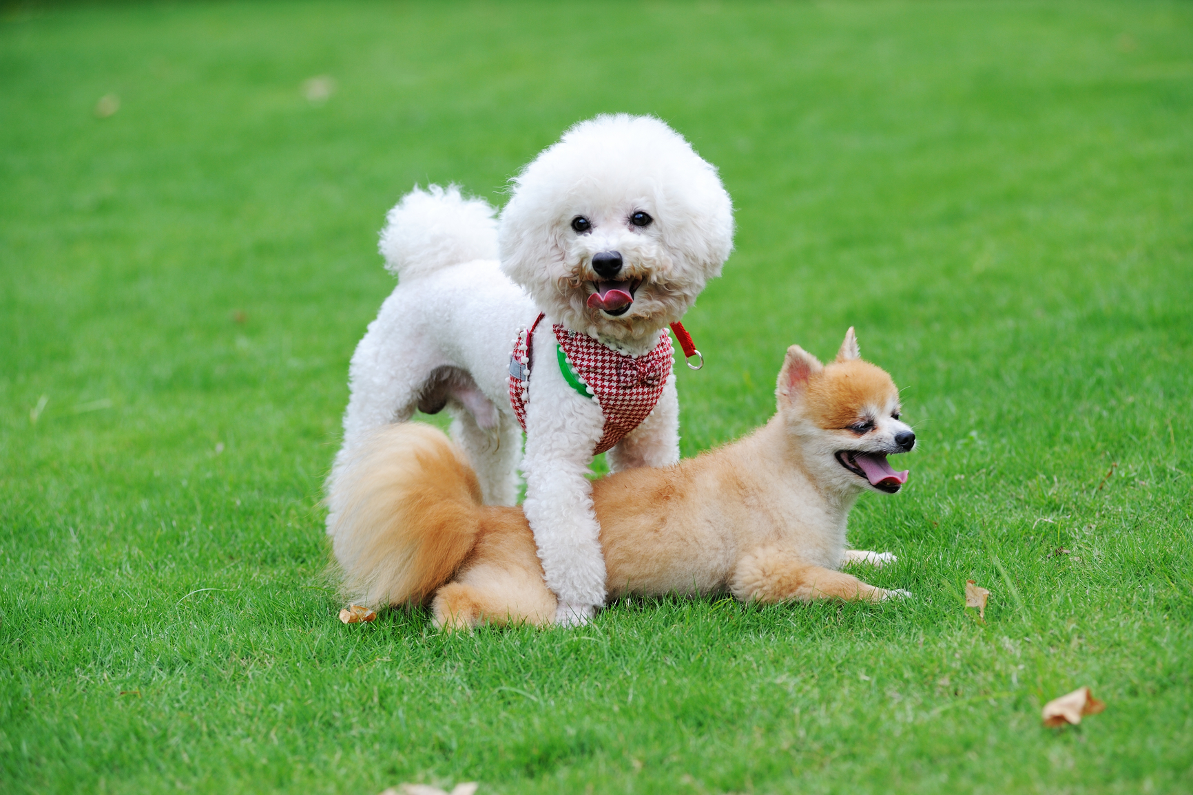 20 Nomi Per Cane Super Carini Nomi Per Cani