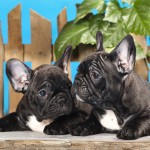 20 Nomi per Cane Super Carini