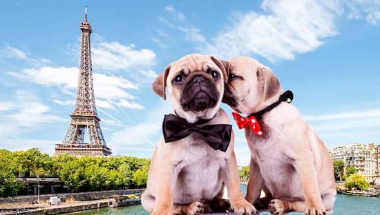 cani a Parigi