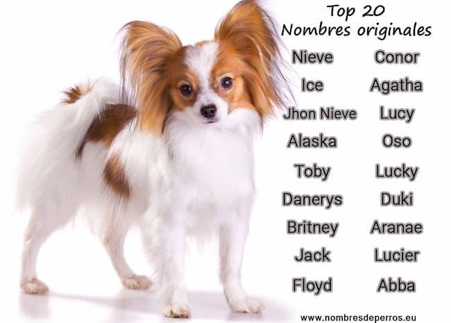 top 20 nomi originali per cani