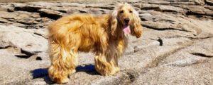 cane nelle isole greche