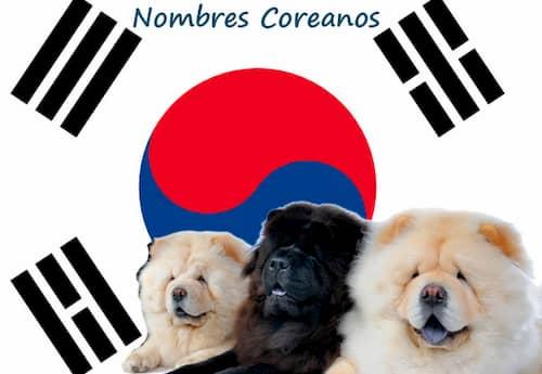 nomi coreani per cani