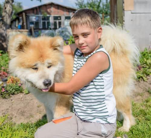 Cane giapponese con un bambino