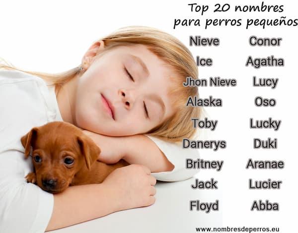 migliori nomi per cani di piccola taglia