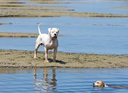 nomi per cani grande