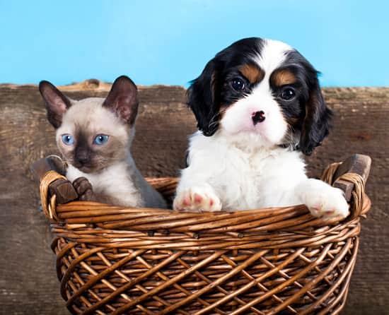 cane bianco e nero con un cucciolo di gatto