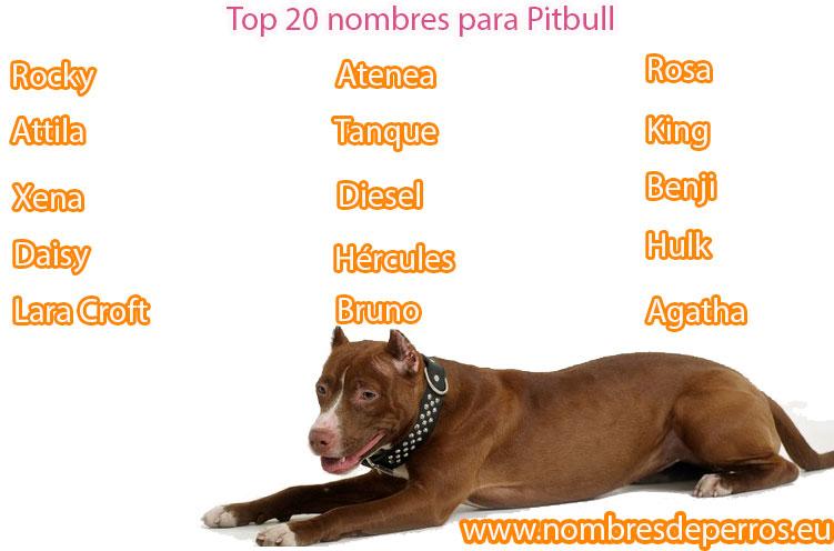 i migliori nomi per pitbull